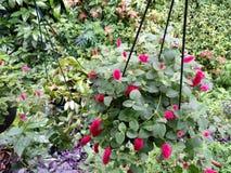 Belles fleurs roses Photo libre de droits