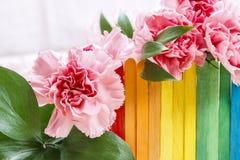 Belles fleurs roses d'oeillet Images libres de droits