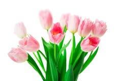 Belles fleurs roses de tulipes d'isolement sur le fond blanc Photographie stock