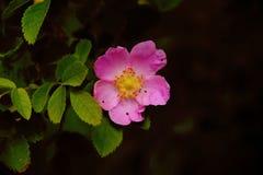 Belles fleurs roses en parc image stock