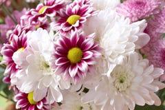 Belles fleurs roses et blanches Photo libre de droits