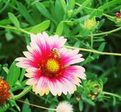 belles fleurs roses naturelles en parc photo stock