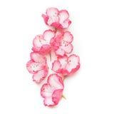 Belles fleurs roses sur le fond blanc Image libre de droits
