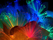 Belles fleurs rougeoyantes féeriques Photographie stock libre de droits
