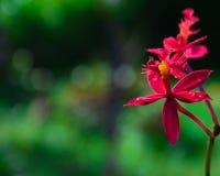 Belles fleurs rouges Photos stock