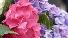 Belles fleurs rouges et bleues s'orienter clips vidéos
