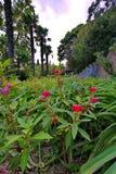 Belles fleurs rouges parmi les feuilles vertes sur le lit de fleur Élevage à la nuance des arbres et des palmiers exotiques Image stock