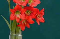 Belles fleurs rouges sauvages en gros plan dans le vase Images stock