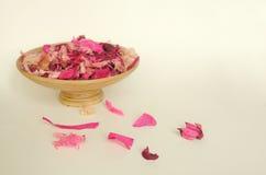 Belles fleurs sèches roses Images libres de droits