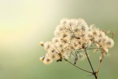 Belles fleurs sèches sur la tache floue lumineuse de fond photographie stock libre de droits