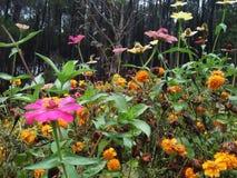 Belles fleurs sans soin spécial dans des forêts de pin photo libre de droits