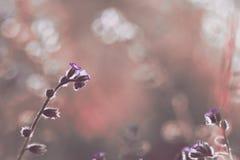 Belles fleurs sauvages Photo stock