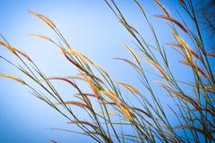 Belles fleurs sauvages dans l'herbe de forestMission le long du marais au coucher du soleil Photographie stock