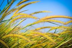 Belles fleurs sauvages dans l'herbe de forestMission le long du marais au coucher du soleil Image libre de droits