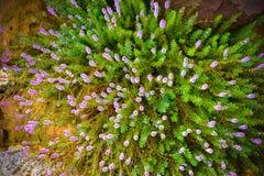 Belles fleurs sauvages dans l'herbe de forestMission le long du marais au coucher du soleil Image stock