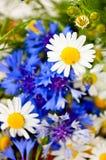 Belles fleurs sauvages et fraises fraîches Images libres de droits