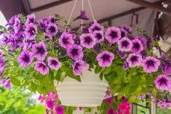Belles fleurs sur la rue photographie stock libre de droits