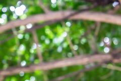 Belles fleurs sur un fond coloré Photographie stock libre de droits