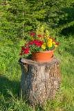 Belles fleurs sur un tronçon photos libres de droits