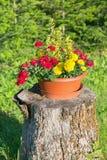 Belles fleurs sur un tronçon photo stock