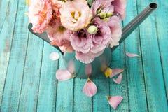 Belles fleurs tendres dans la boîte d'arrosage et des pétales roses sur la surface en bois Photos libres de droits