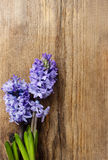 Belles fleurs violettes de jacinthe sur le fond en bois Photographie stock libre de droits