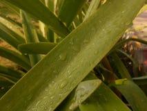 Belles gouttelettes d'eau sur le papier peint vert de feuilles image libre de droits