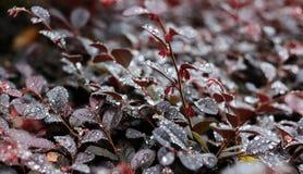 Belles gouttes de rosée sur des feuilles d'arbre Image stock