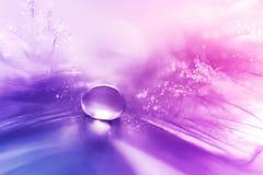 Belles grandes baisses ou pluie de rosée sur le plan rapproché de plume de volaille Image libre de droits