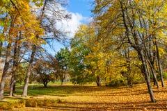 Belles lames d'automne colorées Image stock