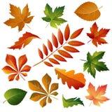 Belles lames d'automne colorées de ramassage Photos stock