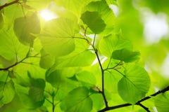 Belles lames de vert Image stock