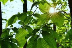 belles lames de vert Images stock