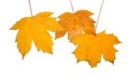 Belles lames en automne Images stock