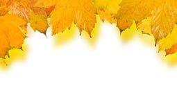 Belles lames en automne Photo libre de droits