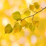 Belles lames en automne Images libres de droits