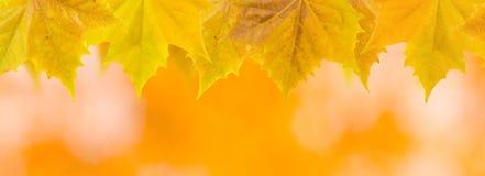 Belles lames en automne Photos libres de droits