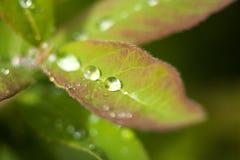 Belles lames fraîches Image stock