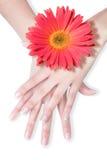 Belles mains avec la marguerite image stock