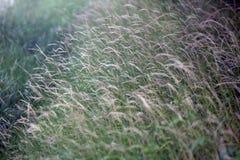 Belles mauvaises herbes Photos libres de droits