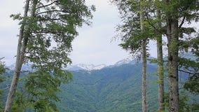 Belles nature, forêts et montagnes, paysage banque de vidéos