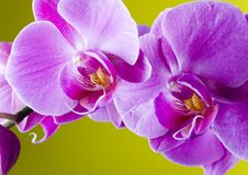 BELLES ORCHIDÉES Photo stock