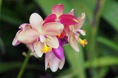 Belles orchidées Image stock