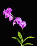 Belles orchidées avec les feuilles vertes images libres de droits