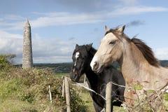 Belles paires de chevaux irlandais Photos libres de droits