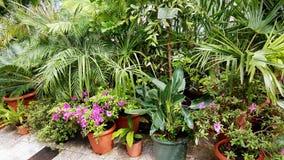 Belles paumes dans Sofia Botanical Garden images stock