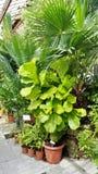 Belles paumes vertes dans Sofia Botanical Garden images libres de droits