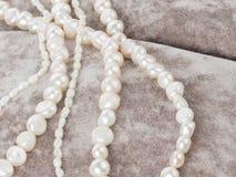 Belles perles de perle sur le velours Photo libre de droits
