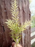 Belles petites feuilles Photos stock