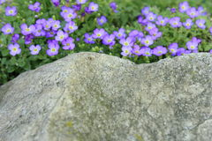 Belles petites fleurs pourpres Image libre de droits